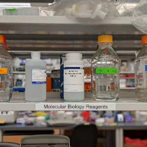 Photo of a shelf in a laboratory holding molecular biology reagents.